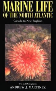 MARINE LIFE OF THE NORTH ATLANTIC CANADA TO NEW ENGLAND Martinez A.J.  2003