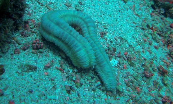 Animal Mystérieux Du Cap Vert