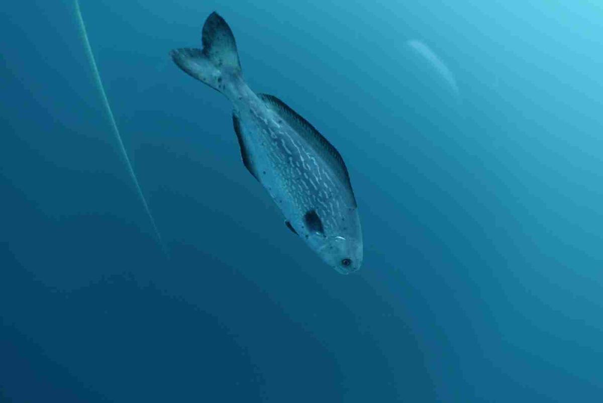 Pouvez vous me donner le nom de ce poisson for A donner poisson
