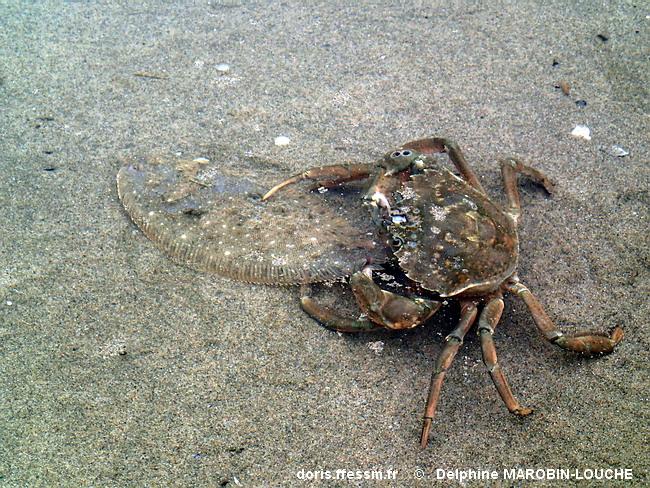 Scorpion mâle rencontres cancer femelle charnière site de rencontre