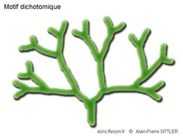 Dichotome_dichotomique_glossaire-aps1