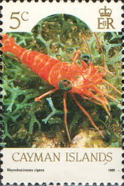 cinetorhynchus_rigens-timbre_stamp-cayman_islands